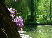 Eure Metal Prints - Wisteria along the pond Metal Print by Danny Cieloha