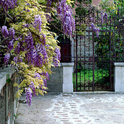 Wisteria In Bloom Framed Prints - Wisteria and Gate in Venice Italy Framed Print by Greg Matchick