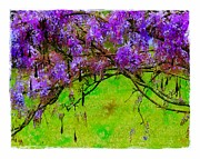 Seedpods Prints - Wisteria Bower Print by Judi Bagwell