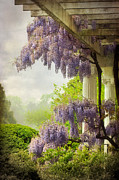 Wisteria Framed Prints - Wisteria in a Spring Shower Two Framed Print by Susan Isakson