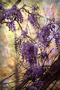 Combined Framed Prints - Wisteria Lane Framed Print by Janeen Wassink Searles