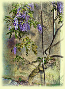 Minchak Framed Prints - Wisteria Wall Framed Print by Joan  Minchak