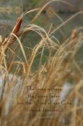 Cattails Photos - Withers And Fades by Debra Straub