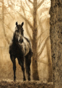Equine Art Paintings - Within the Woods by Simona Tarakeviciute