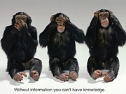Chimpanzee Prints - Without Information You Cant Have Knowledge Print by Pg Reproductions