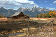 Grand Tetons Framed Prints - Withstanding The Test Of Time Framed Print by Sandra Bronstein