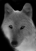 Fractalius Digital Art Framed Prints - Wolf - Black and White Framed Print by Sandy Keeton