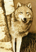 Wolf Pyrography - Wolf Amongst The Birches by Cate McCauley
