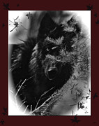 Nature And Wolves Framed Prints - Wolf Black And White Designer Framed Print by Debra     Vatalaro