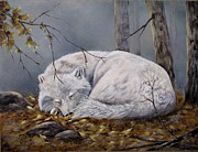 Mary McCullah - Wolf Dreams