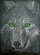 Wolves Pastels Framed Prints - Wolf Eyes Framed Print by Kimberly Smith