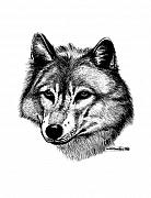 Wolf Posters - Wolf in pencil Poster by Nick Gustafson