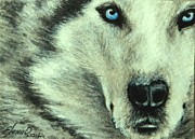 Wolf Eyes Framed Prints - Wolf Framed Print by Lena Day