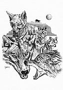 Wolf Drawings Framed Prints - Wolf Life Cycle Framed Print by John Keaton