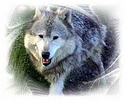 Wolf Print by Marty Koch