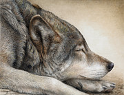 Wolves Painting Prints - Wolf Nap Print by Pat Erickson