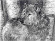 Gray Drawings Prints - Wolf number six Print by Carla Kurt