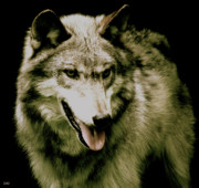 One Animal Mixed Media Posters - Wolf Of The Night Poster by Debra     Vatalaro