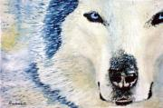 Intense Paintings - Wolf by Ramon Martinez sanmarti