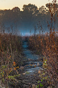 Illinois Art - Wolf Road Prairie Trail by Steve Gadomski