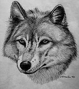 Wildlife Art Drawings Posters - Wolf sketch Poster by Nick Gustafson