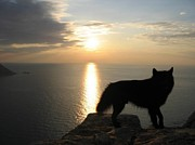 Autumn Photographs Photos - Wolf Sunset by Paul Baker