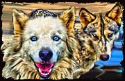 Dog Cards Prints - Wolfs Eyes Print by Tisha McGee