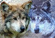 Tom Romeo Acrylic Prints - Wolves Acrylic Print by Tom Romeo
