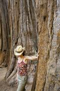 Observer Prints - Woman Leaning On Giant Sequoia Tree Print by Dawn Kish