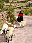 Shepherd Island Posters - Woman Shepherd on Taquille Island in Lake Titicaca Poster by Ruth Hager