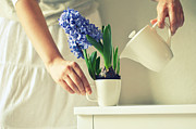 Holding Flower Prints - Woman Watering Blue Hyacinth Print by Photo by Ira Heuvelman-Dobrolyubova