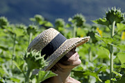 Sun Hat Prints - Woman with straw hat Print by Mats Silvan