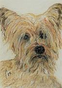 Yorkie Drawings - Wonder-ful by Cori Solomon