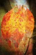 Gelb Posters - Wonderful autumn Poster by Angela Doelling AD DESIGN Photo and PhotoArt