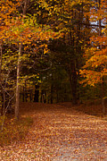 Foliage Photographs Prints - Wonderful Fall Colors Print by Robert  Torkomian