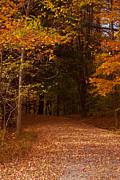 Wonderful Fall Colors Print by Robert  Torkomian