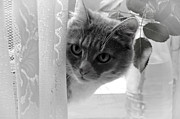 Hello Photo Acrylic Prints - Wondering. Kitty Time Acrylic Print by Jenny Rainbow