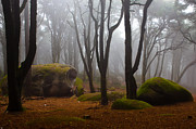 Forest Art - Wonderland by Jorge Maia