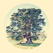 Townsend Prints - Wonderland Tree Print by Linde Townsend