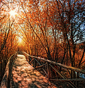 Lens Flare Posters - Wood Bridge Between Trees Poster by Zu Sanchez Photography
