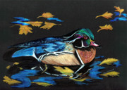 Gold Drawings Prints - Wood Duck and Fall Leaves Print by Carol Sweetwood