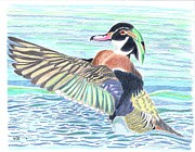 Tony  Nelson - Wood Duck Drake