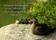 Wildlife Christian Art Prints - Wood Duck Family and Psalm 61 Print by Cindy Wright