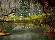 Wood Duck Love Print by Julie McDoniel