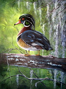 Mary Mccullah Posters - Wood Duck Poster by Mary McCullah