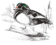 Wood Duck Painting Posters - Wood Duck On Log Poster by Barry Louwerse