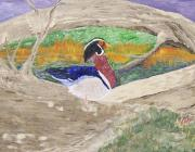 Fall Scenes Drawings Posters - Wood duck part 1 Poster by Roy Penny