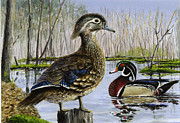 Wood Duck Painting Metal Prints - Wood Duck Metal Print by Paul Gardner
