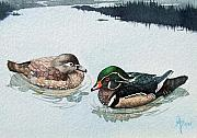 Waterfowl Paintings - Wood Ducks by Gale Cochran-Smith
