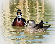 Laurie Adams - Wood Ducks